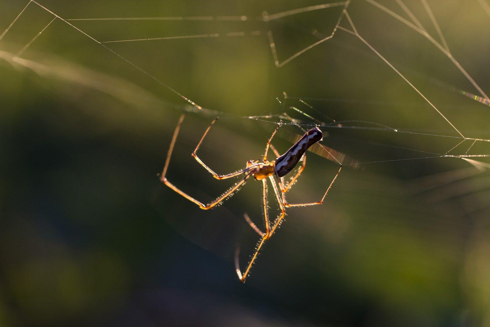 plaga arañas